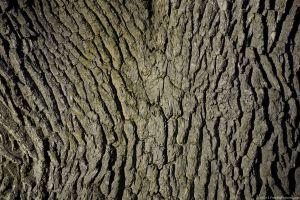 tree-skin