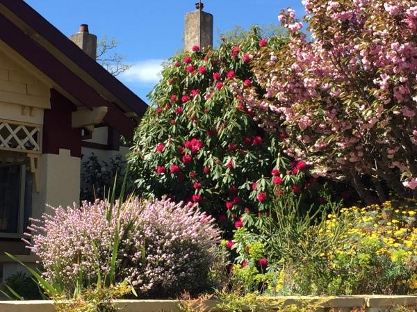 blossoms glenrowan 17